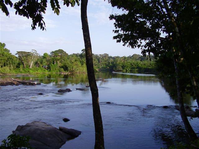 Suriname bossen
